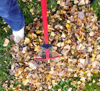 pulire il giardino
