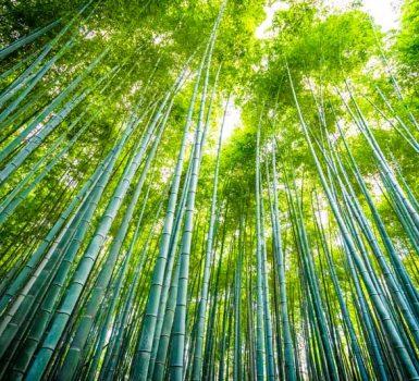 cerotti di sale detox al bamboo